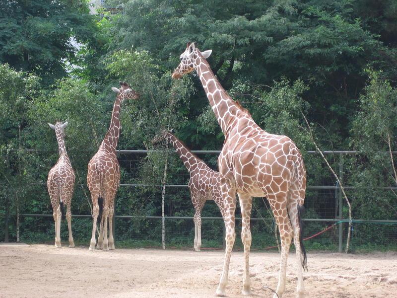 Im Zoo...