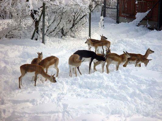 Im Zoo hat es geschneit