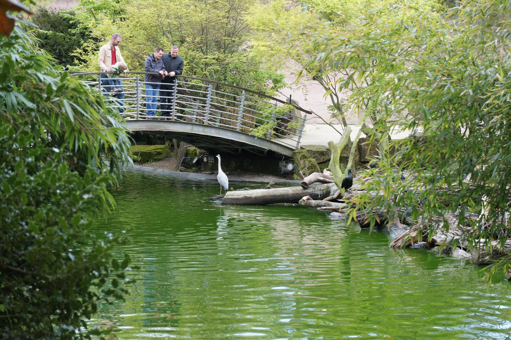 im Zoopark