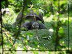 Im Zürcher Zoo