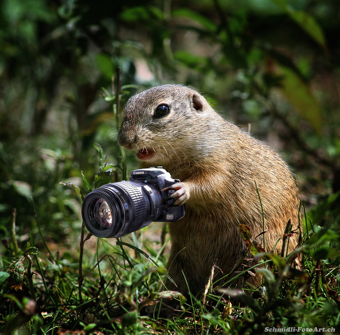 Immer diese nervigen Paparazzi mit ihren Kameras!
