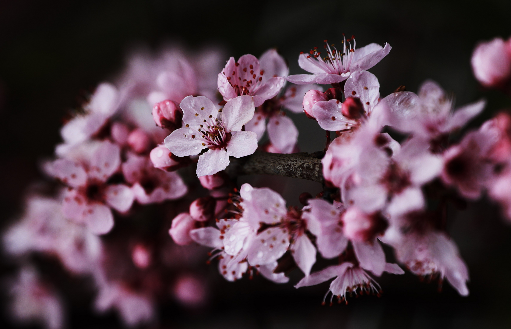 ..immer mehr Blüten.....