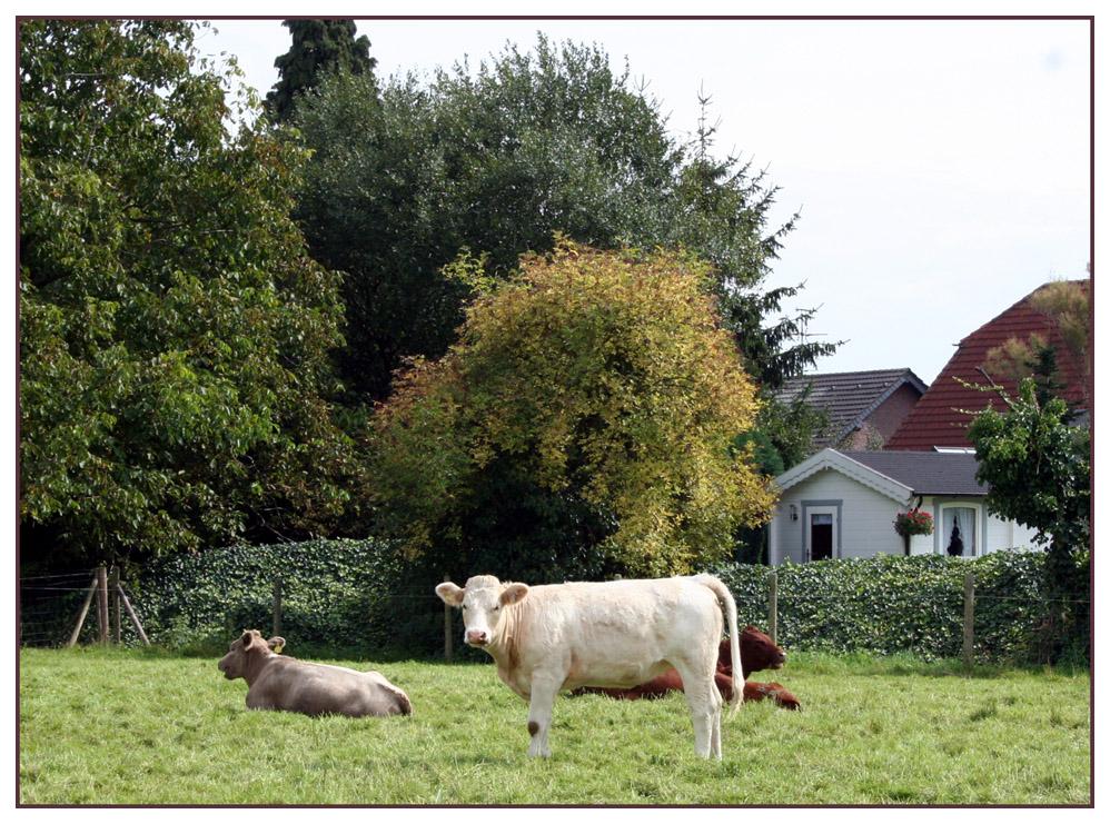 Immer noch auf dem Bauernhof