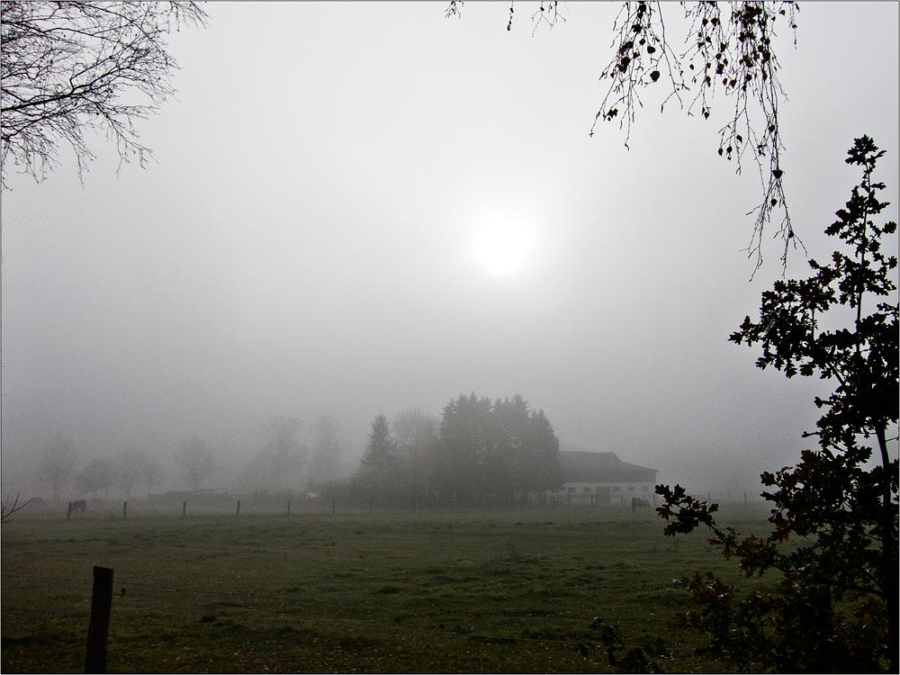 immer noch Nebel, aber ... ein Lichtblick