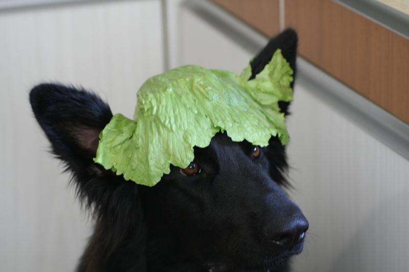 immer nur Salat...........