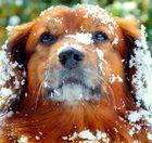 ..immer nur Schnee, Schnee...jetzt hab ich aber genug davon....