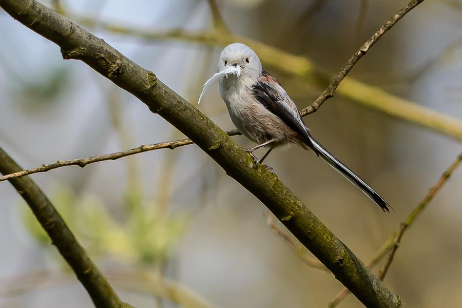 Immer schön für's Nest sammeln....