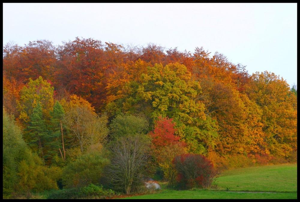 Immernoch Herbst