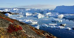 Impression 12: Foto- und Erlebnisreise -Grönland Eisberge und andere Impressionen- im Sept. 2017