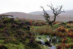 Impression 30: Fotoworkshop -Nord Schottland im Herbst-