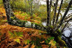Impression 35: Fotoworkshop -Nord Schottland im Herbst-