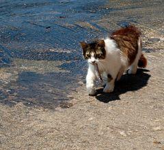 Impression 38: Fotoworkshop - Kykladen Insel Milos - (Griechenland)