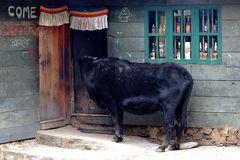 Impression 39: Foto- und Erlebnisreise Himalaya Staat Sikkim - Nordostindien
