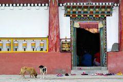 Impression 6: Foto- und Erlebnisreise Himalaya Staat Sikkim - Nordostindien
