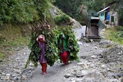 Impression 8: Foto- und Erlebnisreise Himalaya Staat Sikkim - Nordostindien