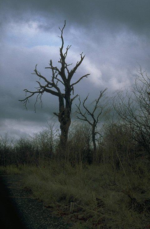 Impression aus dem Krüger Park
