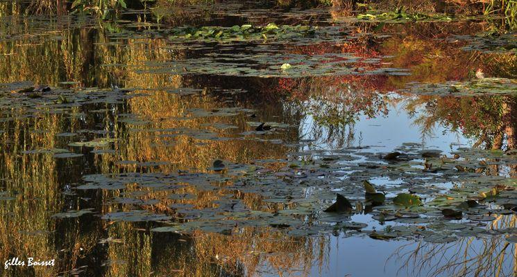 impression d'automne sur l'étang