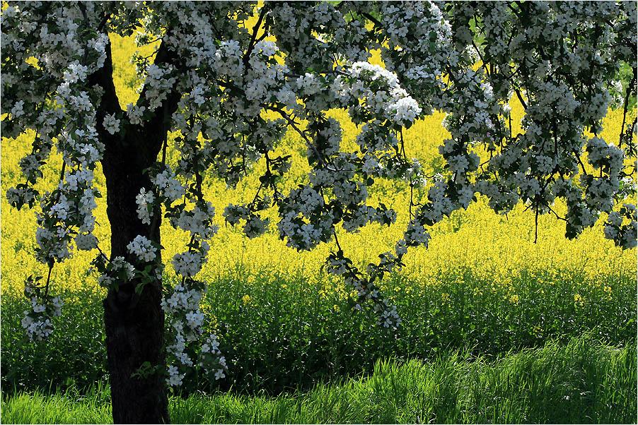 Impression des Frühlings