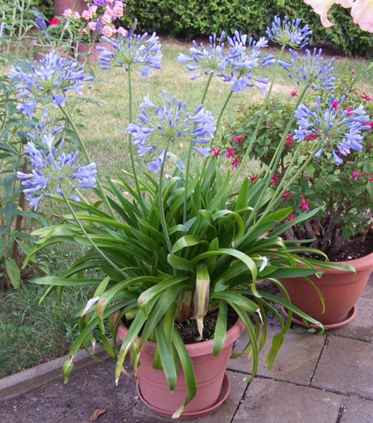 Impression im Garten