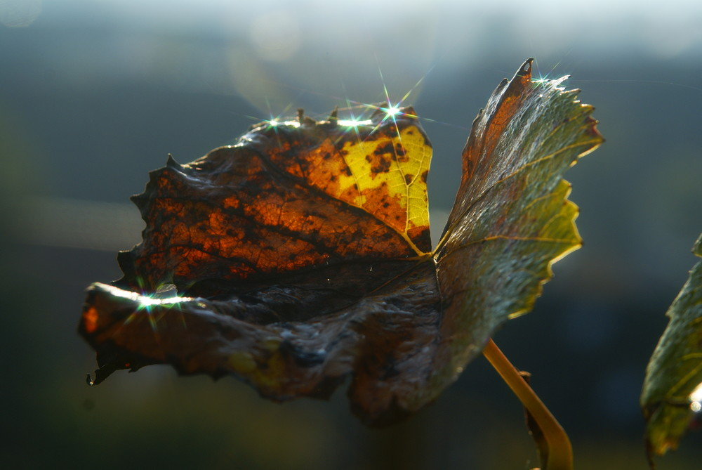 Impression imHerbst