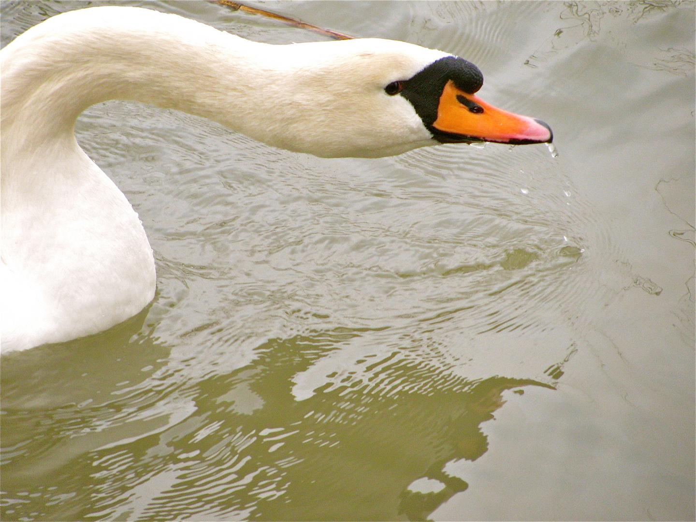 ... Impressionen an der Saône !!!...