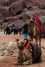 Impressionen aus Petra 3