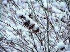 Impressionen im Schnee
