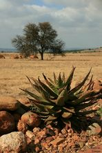 Impressionen Südafrika_02