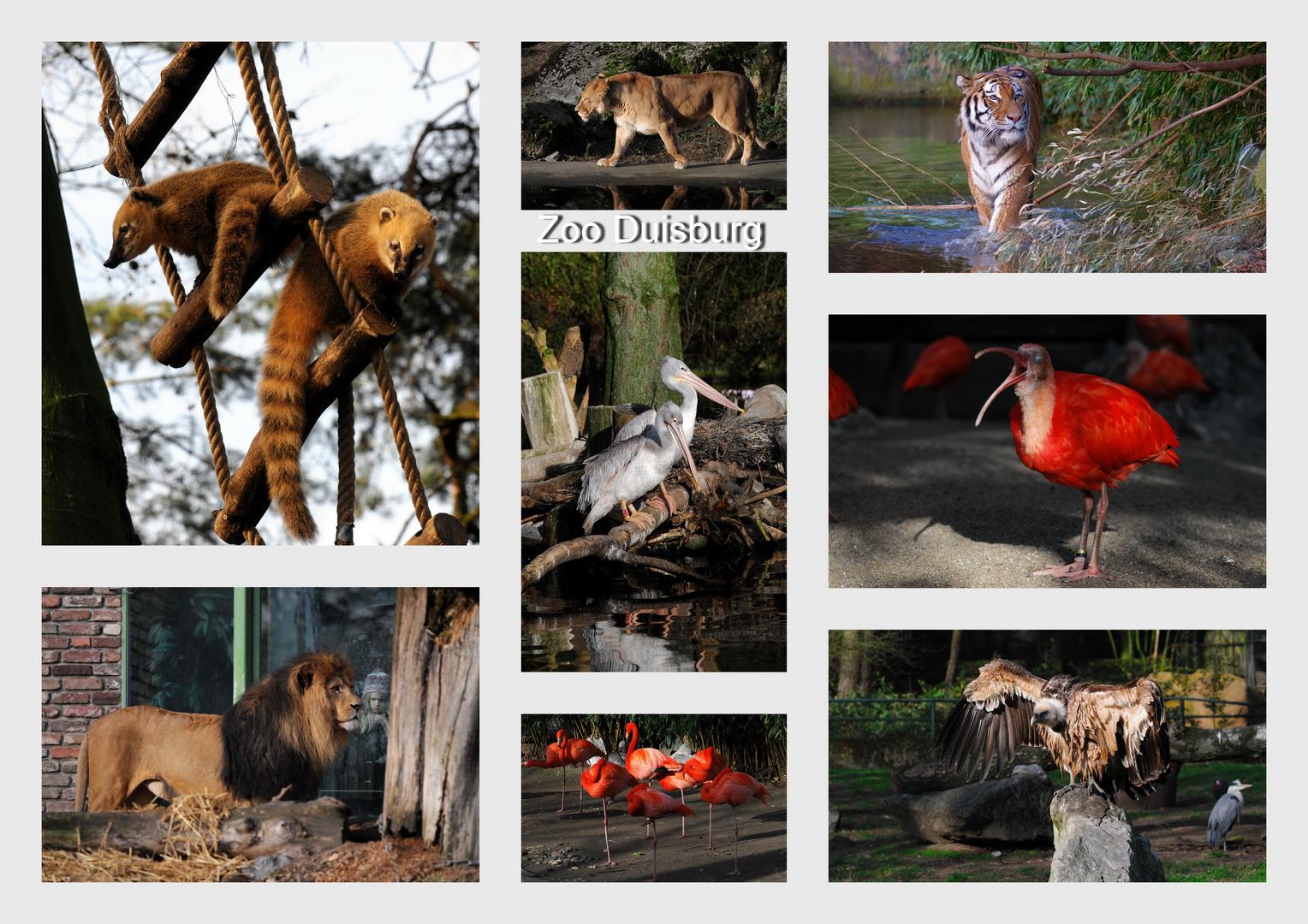 Impressionen vom Duisburger Zoo