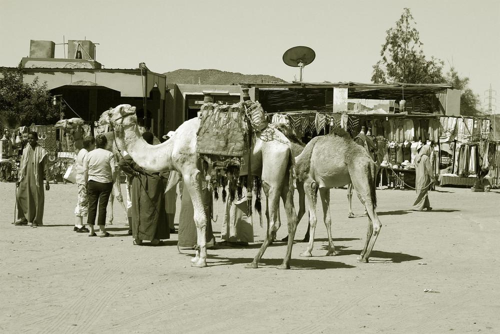 Impressionen von Ägypten - 14