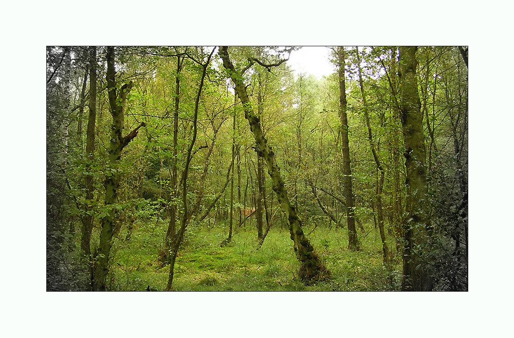 Impressionen Wahner Heide #1