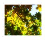 Impressioni d'autunno/6