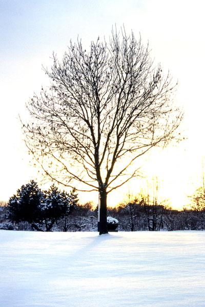Impressionien des Winters