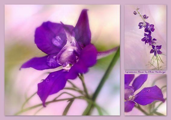 Impressionism Flower (avec Sigma 50mm Art)