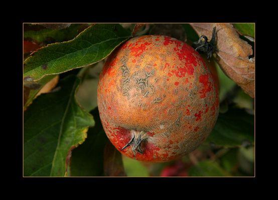 Impressionismus auf Apfel