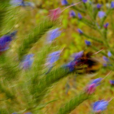 Impressionnisme floral
