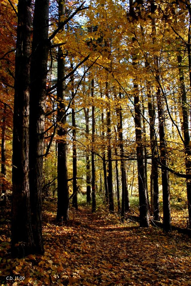 Impressions of Sweden in autumn V