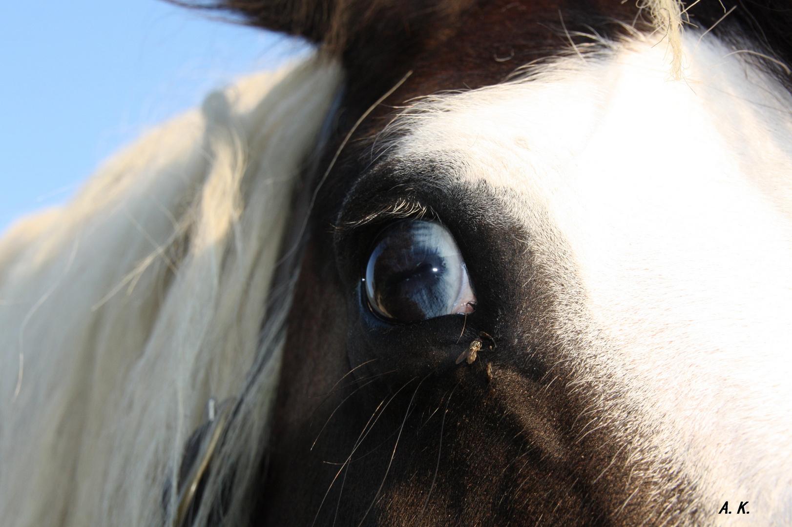In Augen so Blau will ich jetzt schaun....