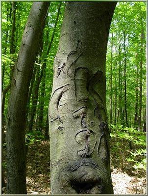 In Baum geritzt