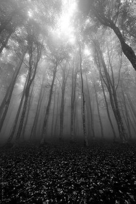 ... in bianco e nero ***/