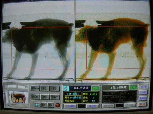 """""""In China essen sie Hunde"""" unter Anderem."""