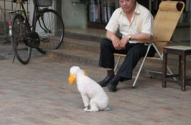 In China färben sie Hunde