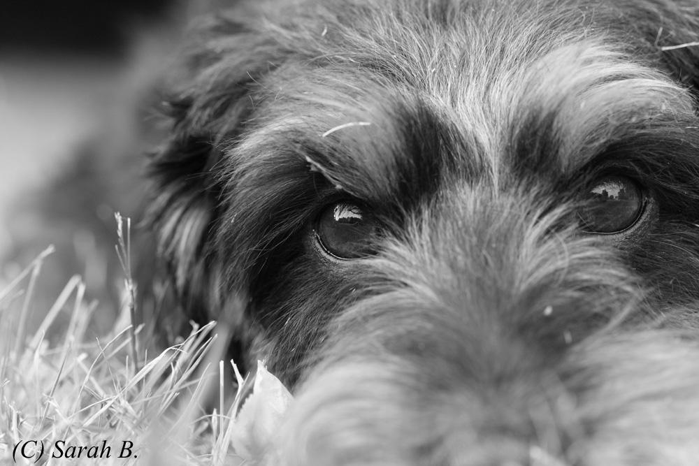 In den Augen meines Hundes...