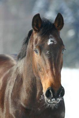 In den Augen meines Pferdes liegt mein ganzes Glück