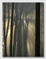 In den Baumbergen