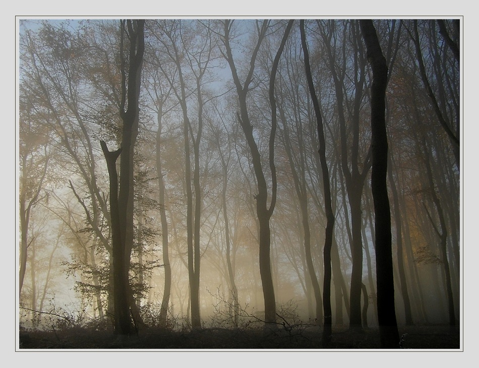 In den Baumbergen III