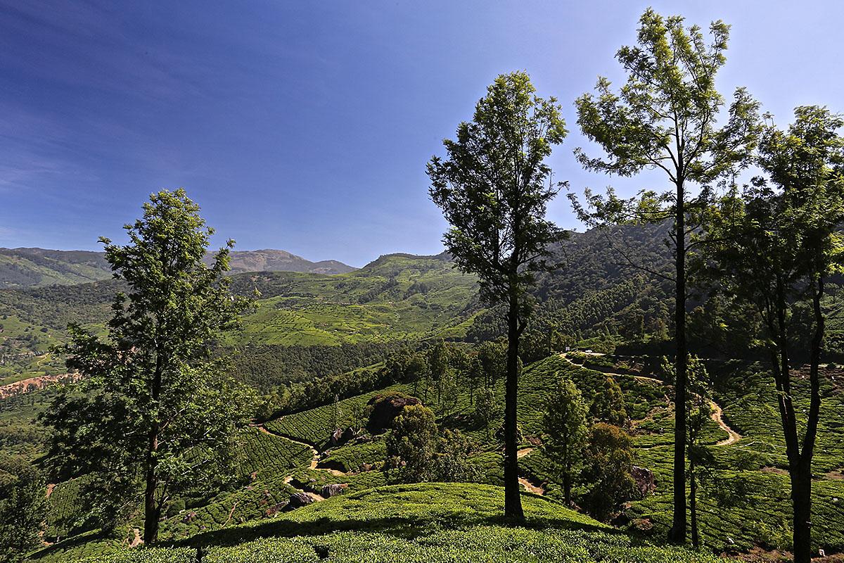 In den Bergen von Munnar, Indien, Kerala, #2