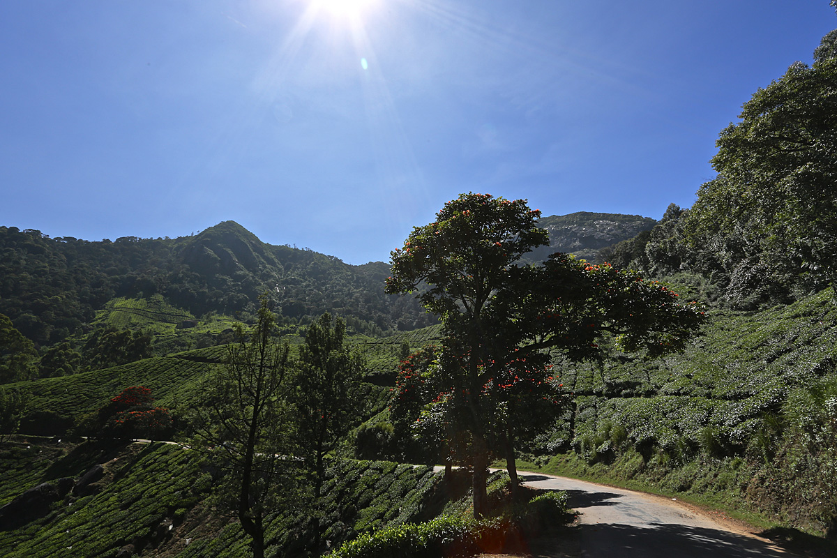 In den Bergen von Munnar, Indien, Kerala