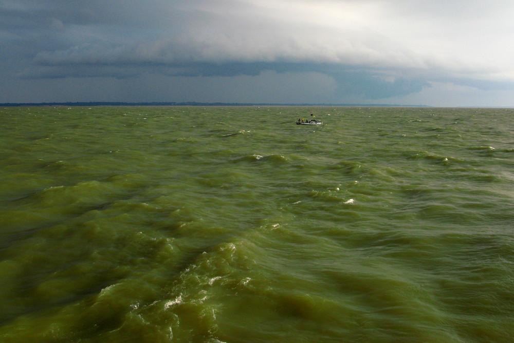 In den grünen Fluten des Amazonasdeltas
