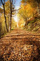 .. in den Herbst eintauchen ..